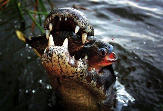 Una instantánea de vida salvaje en Esteros del Iberá