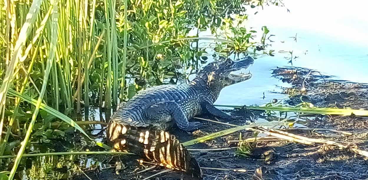 Reserva Natural Esteros del Iberá - Un verdadero paraíso para los amantes de la naturaleza