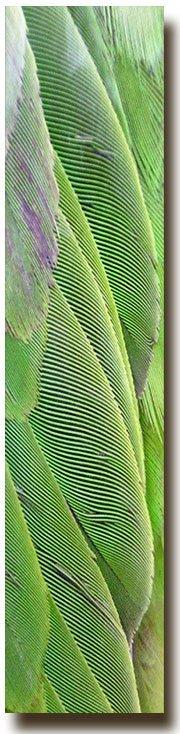 textura Amazonas