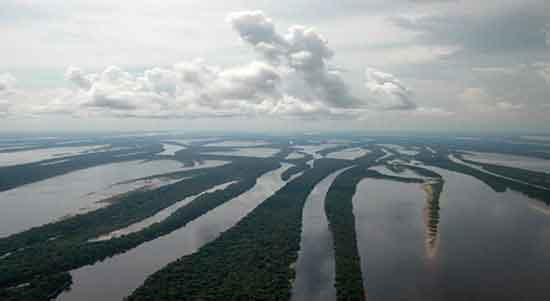 EXPEDICIÓN AMAZONAS Y PARQUE NACIONAL ANAVILHANAS