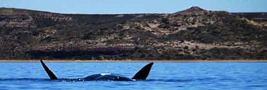 Josep y Dolors, avistando ballenas en Península Valdés