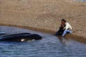 Beto Bubas acaricia a las orcas y les toca la armónica