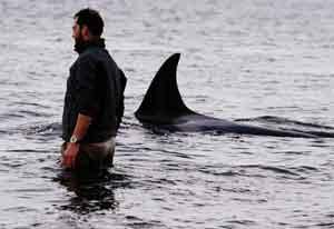 Roberto Bubas se interna en las aguas junto las orcas