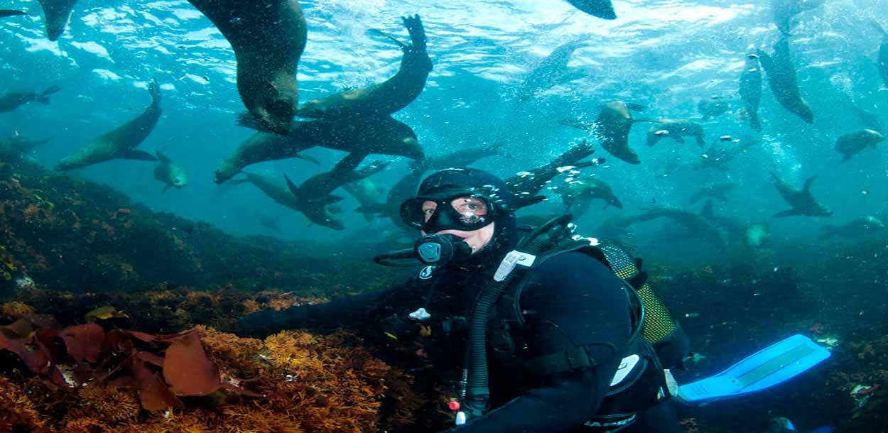 Snorkeling y Buceo en Puerto Madryn con Lobos Marinos