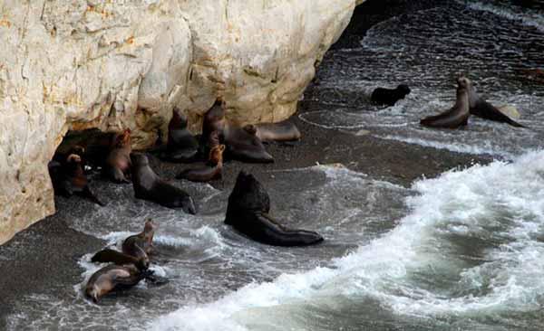 Colonia de lobos marinos del apostadero de Punta Loma - Snorkeling y Buceo en Puerto Madryn con Lobos Marinos