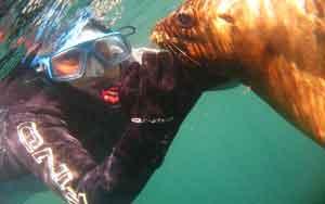 Buceo en Puerto Madryn - Los lobos marinos