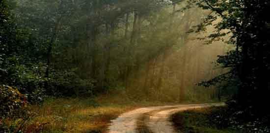 el escenario ideal para la preservación de la flora y fauna autóctona del subcontinente indio