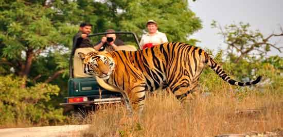 Parque Nacional Bandhavgarh, el parque que ofrece más probabilidades de avistamiento de tigre en su hábitat natural.