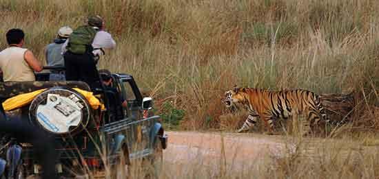 Parque Nacional Pench representa todo lo que el Proyecto Tigre intenta salvaguardar para las generaciones venideras
