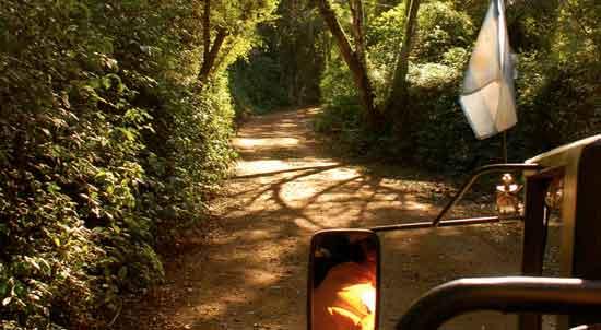 Turismo activo en Iguazú - Safari en la Selva