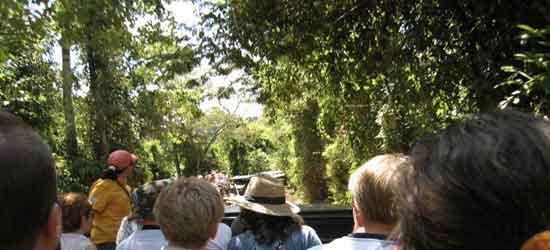 Empezamos el recorrido adentrándonos en la selva por el estrecho Sendero Yacaratiá