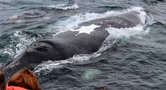 Las ballenas testimonio de viaje a Argentina