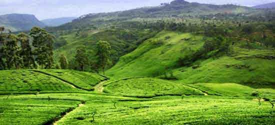 la isla del té (Nuwara Eliya)