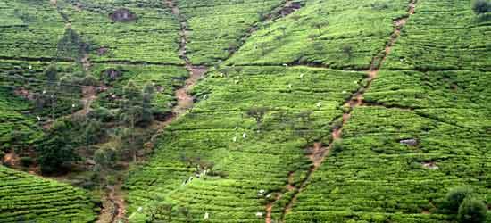 Nuwara Eliya - Sri Lanka en Privado