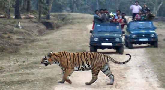 India con Miguel e Iván - Parque Nacional Pench (foto de Miguel e Iván)