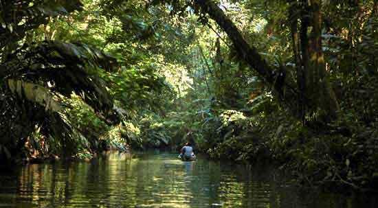Red de canales del Parque Nacional Tortuguero accesibles en canoa sirve de hábitat a una increíble fauna