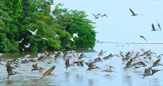 Un destino imprescindible para el viajero sagaz amante del ecoturismo.