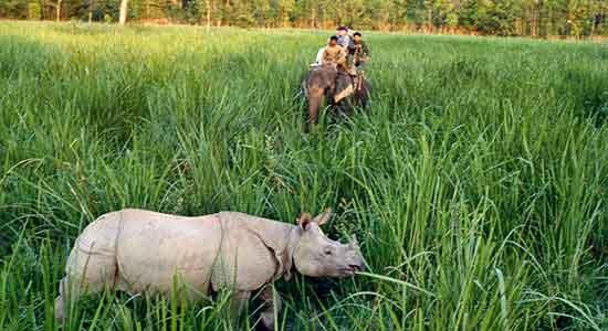 El rinoceronte asiático de un solo cuerno (Chitwan)