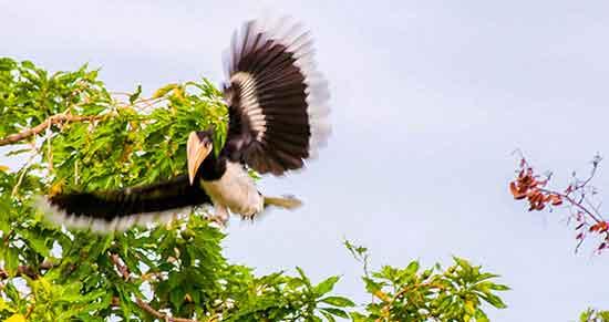 El Parque Nacional de Udawalawa: un lugar fantástico para el birdwatching