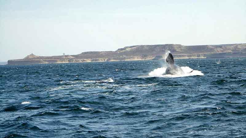 Avistaje de ballenas en Península Valdés.