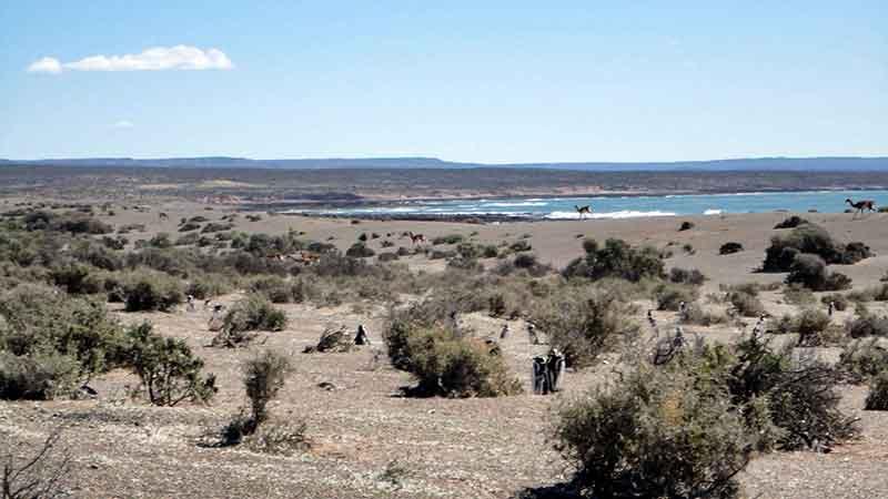 Pingüinera de Punta Tombo.