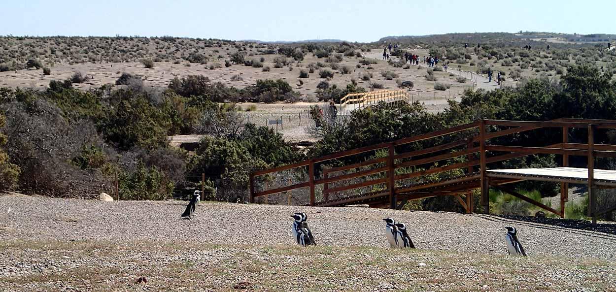 Guía de Punta Tombo