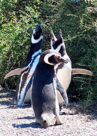 Punta Tombo: la visita
