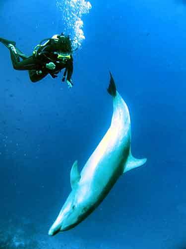 Amaia buceando con delfines