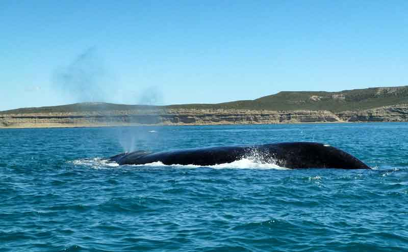 Avistaje de ballenas, Península Valdés.