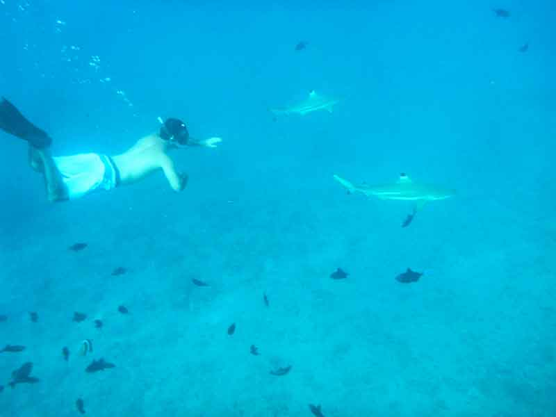 Esnórquel con tiburones