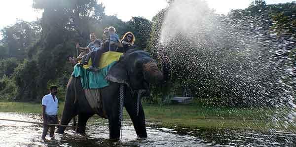Fin de Año en Sri Lanka y Maldivas - Paseo en elefante en Sigiriya