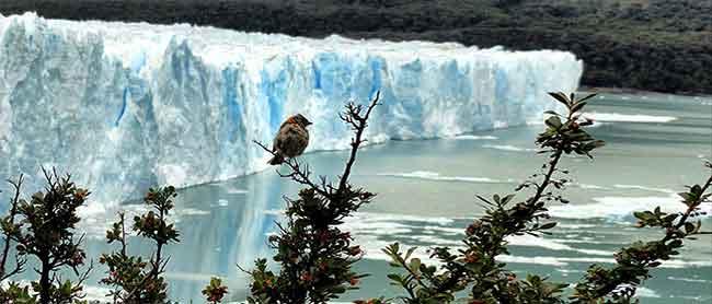 Glaciar Perito Moreno (foto de José Luis) - La Patagonia salvaje de José Luis