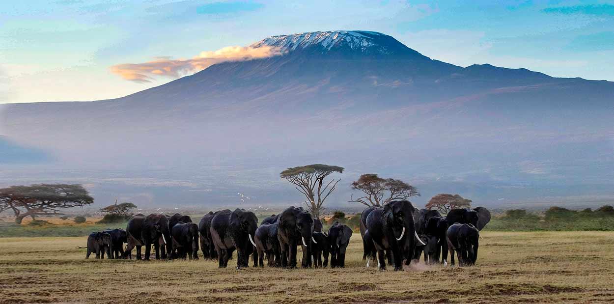 Qué ver en Kenia - La imagen intemporal del safari en África