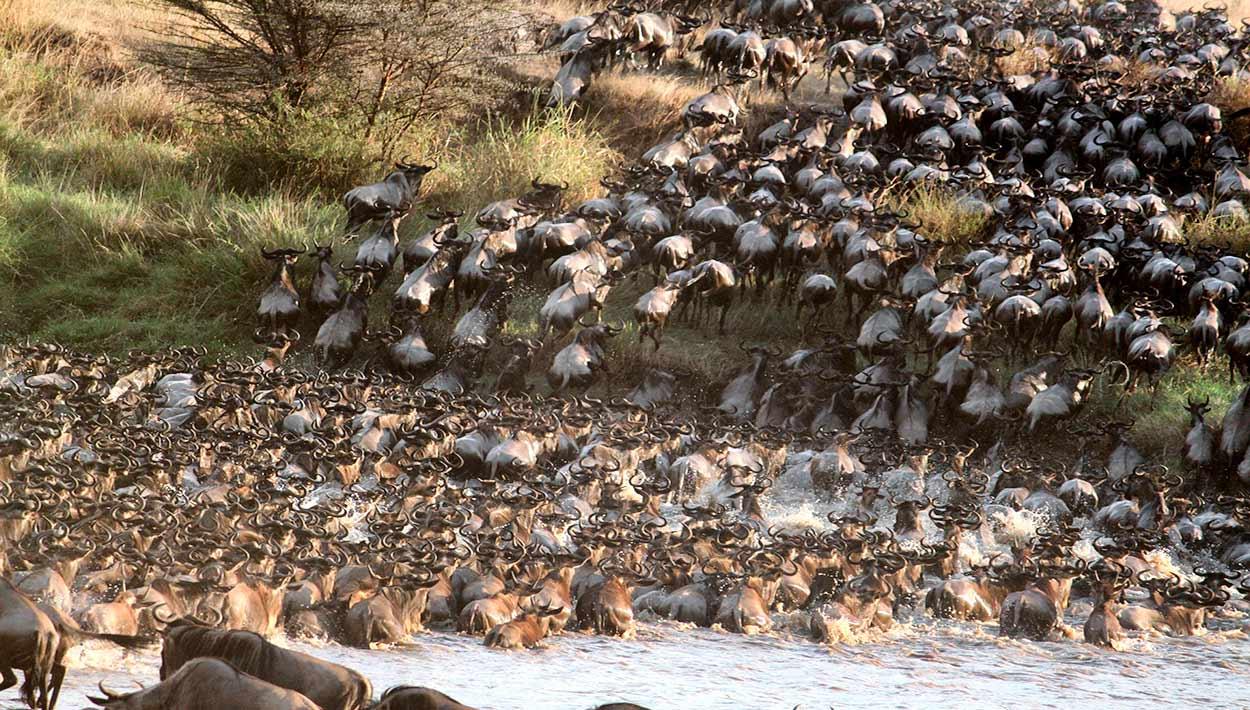 Qué ver en Kenia - gran migración
