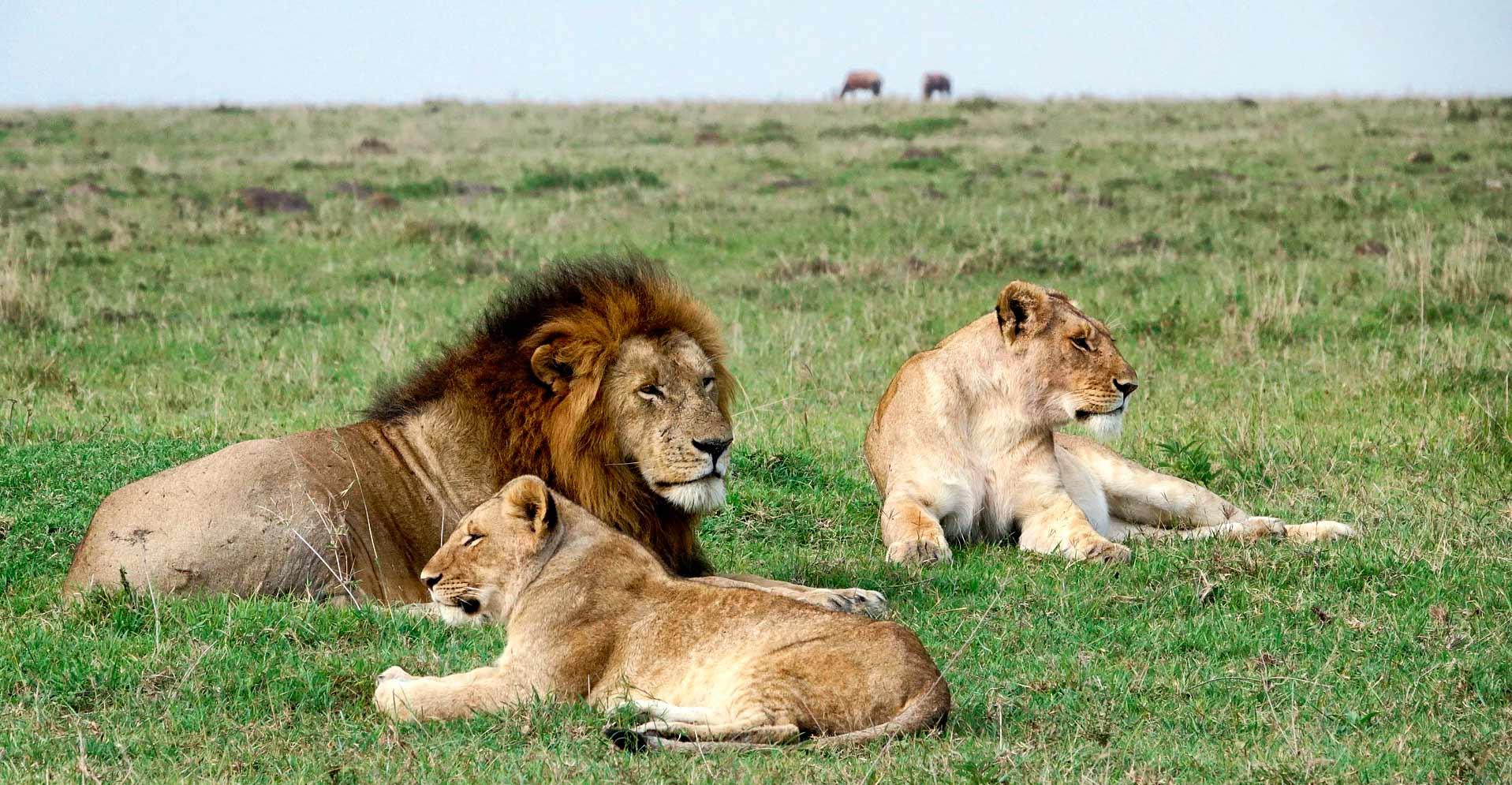 Qué ver en Kenia - Image by Margo Tanenbaum from Pixabay