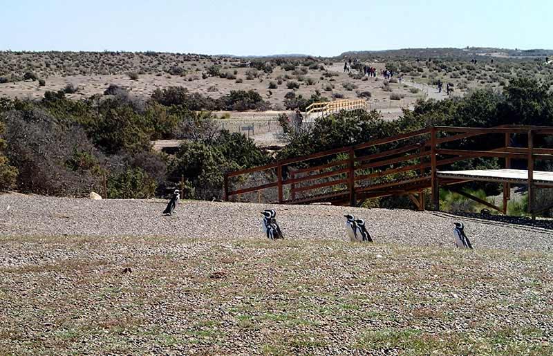 Viaje a Patagonia de Carolina y Alberto: Punta Tombo