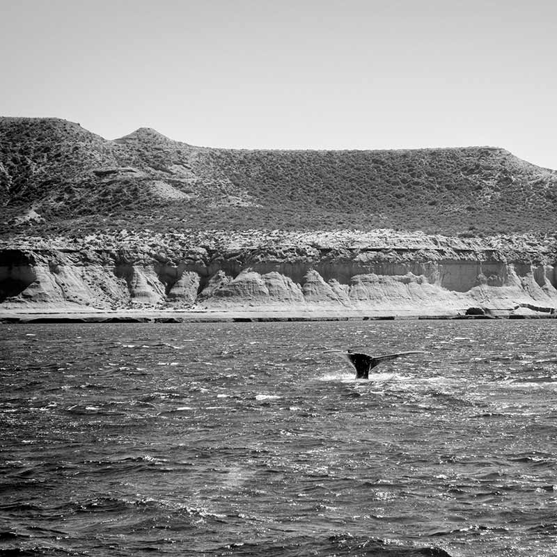 Ballenas en Península Valdés