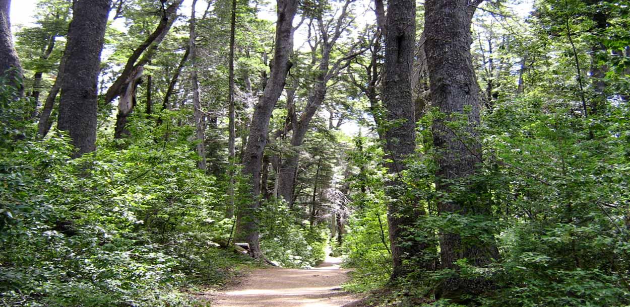 Bosque de Arrayanes - Qué hacer en Bariloche