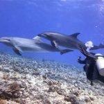 Una familia de delfines, que se acercan a jugar con los buceadores, en el paso de Tiputa
