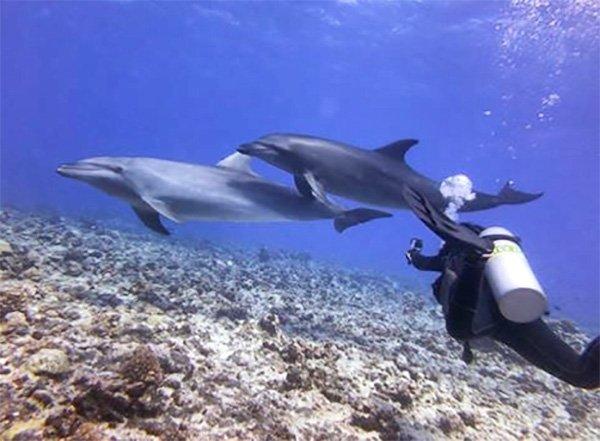 Testimonio de buceo en Polinesia Francesa de Marta y Asier: una familia de delfines, que se acercan a jugar con los buceadores, en el paso de Tiputa.