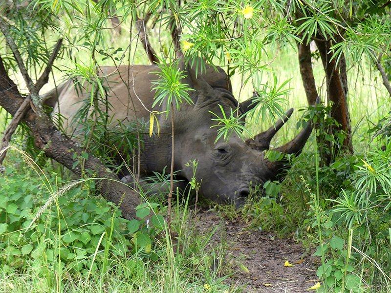 Safari a Uganda de Amparo 02