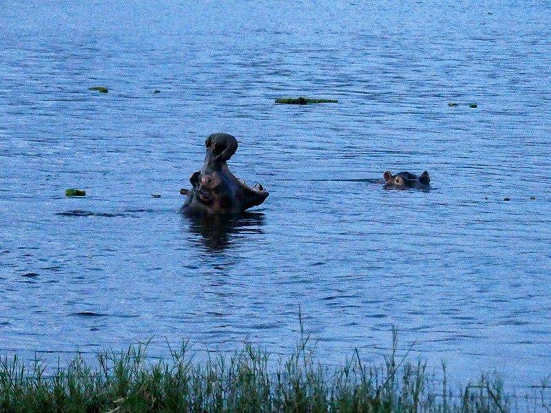 Safari a Uganda de Amparo 04