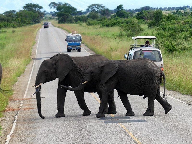 Safari a Uganda de Amparo 08