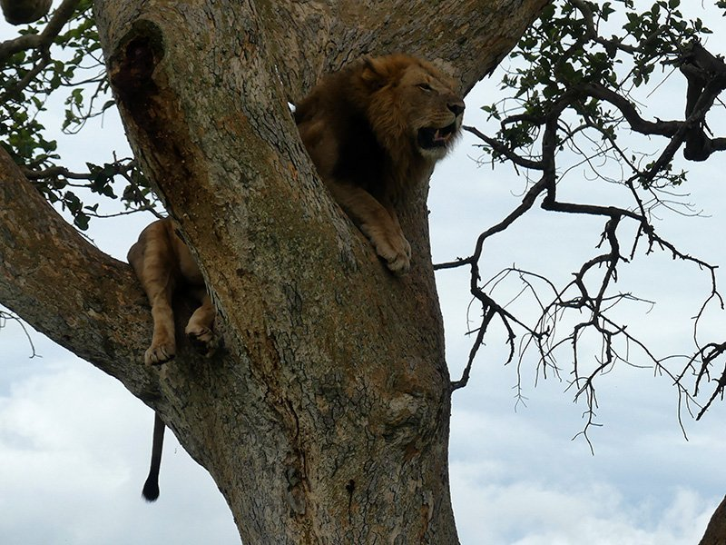 Safari a Uganda de Amparo 09