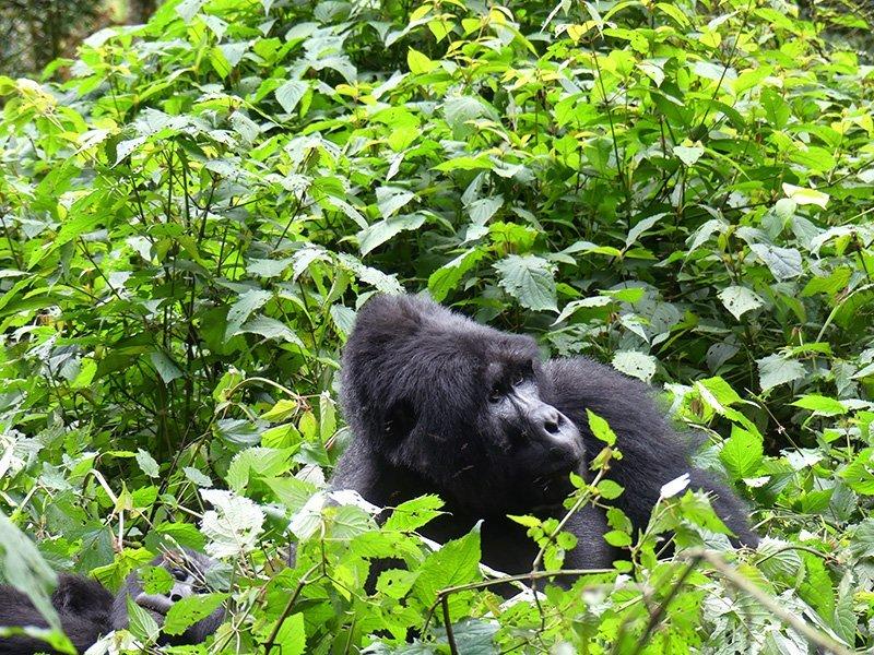 Safari a Uganda de Amparo 11