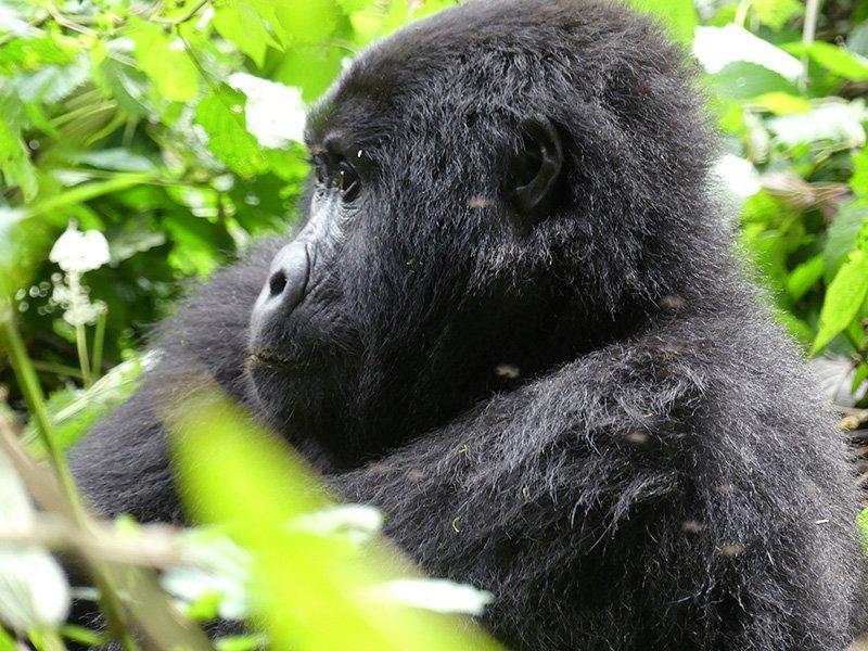 Safari a Uganda de Amparo 12