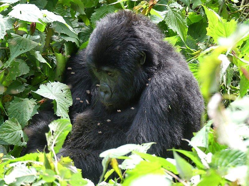 Safari a Uganda de Amparo 13