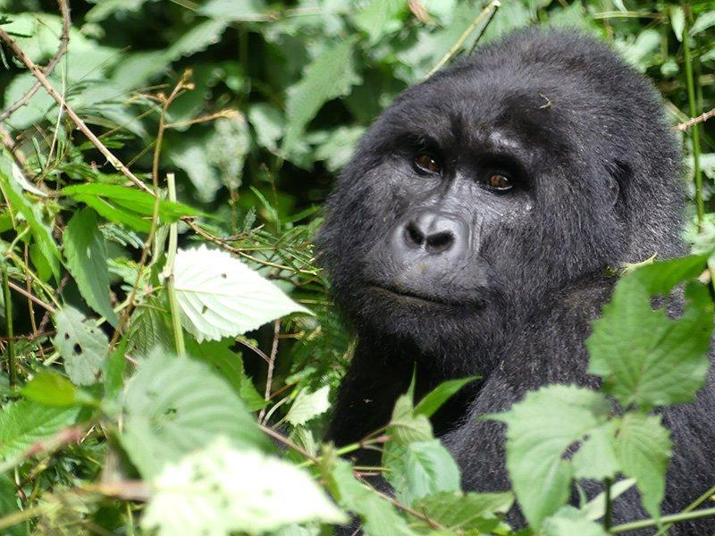 Safari a Uganda de Amparo 14