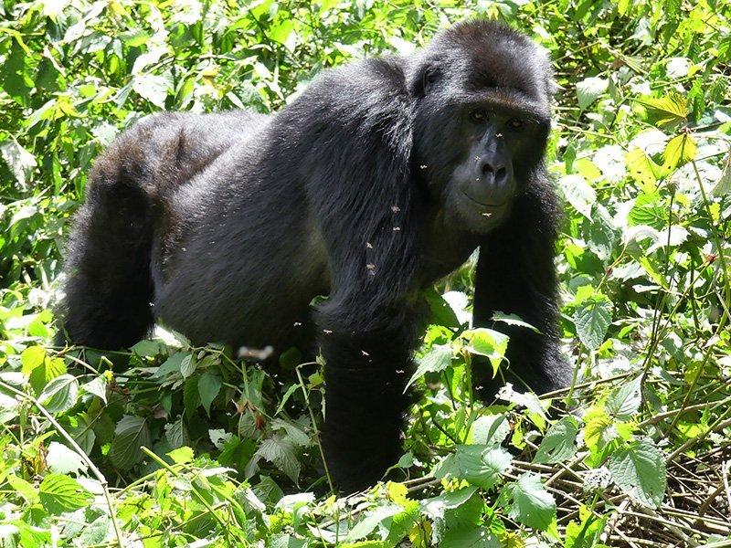 Safari a Uganda de Amparo 15