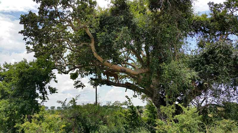 Viaje a Kenia y Uganda de Angelika, Marta, Nefo y Óscar 07